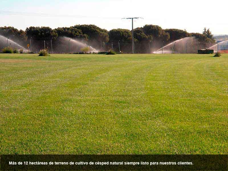 Somos los únicos productos en la zona Oeste de Madrid. Mas de 12 H. de terreno, Viveros Coronado desde 1989