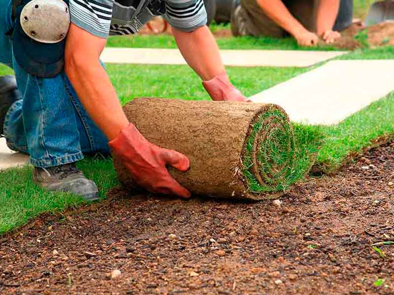 Colocando un rollo de tepe