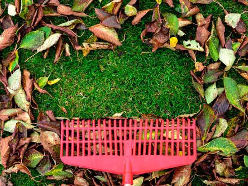 Limpiezas de jardines