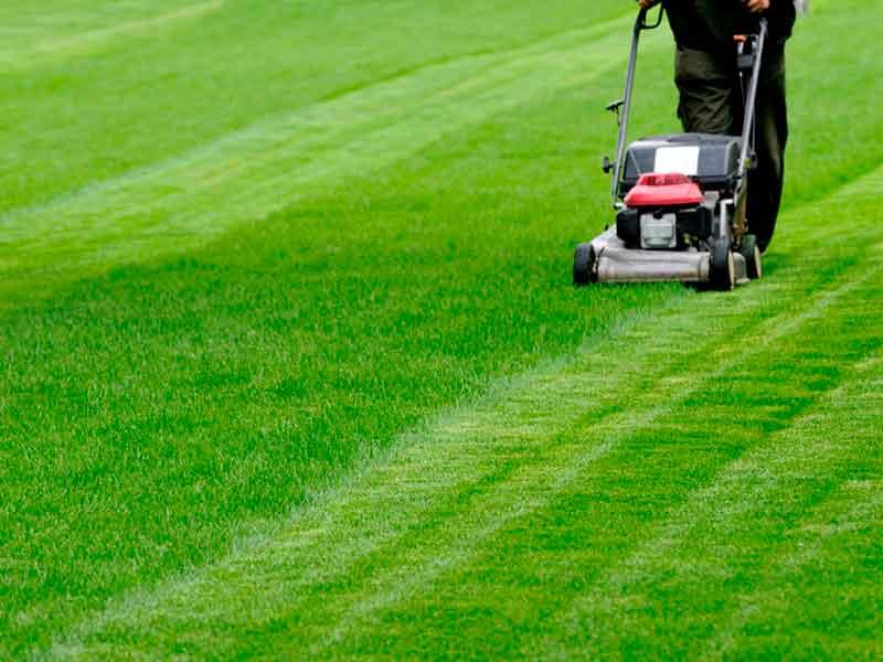 Mantenimiento y trabajos de jardinería a domicilio