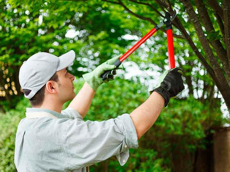 Podas en jardines de chalets y comunidades de propietarios