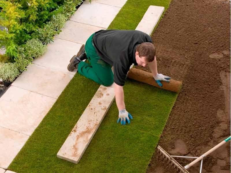 Instalando rollos de césped natural en suelo previamente preparado para ello
