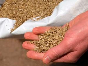 Semillas de céspde Rye grass Inglés. Viveros Coronado Navalcarnero, Madrid