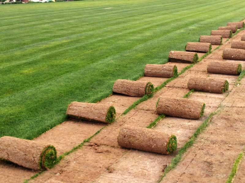 Rollos de tepe después de ser extraídos del terreno