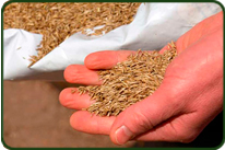 Venta de semillas de cesped en Viveros Coronado en Navalcarnero Madrid