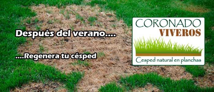 Viveros en madrid centro empresa de jardineria venta de for Vivero alcobendas