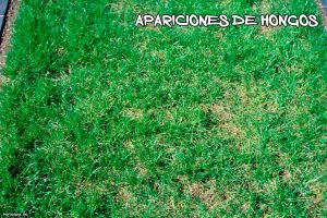 hongos-jardin