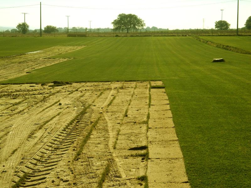 Vista del terreno después de la extracción del tepe