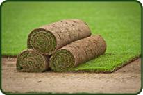 Venta de cesped natural en planchas, rollos o tepes en Madrid. Viveros Coronado
