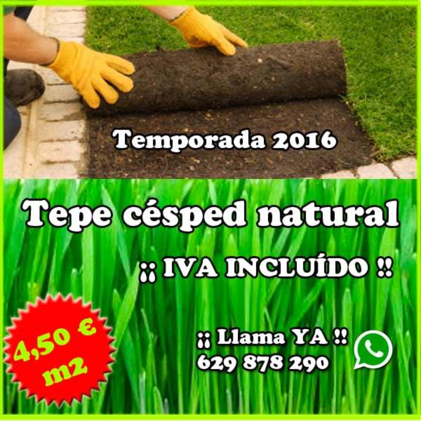 Tepe de césped natural oferta 4,50 € IVA INCLUIDO. Viveros Coronado en Navalcarnero (Madrid)